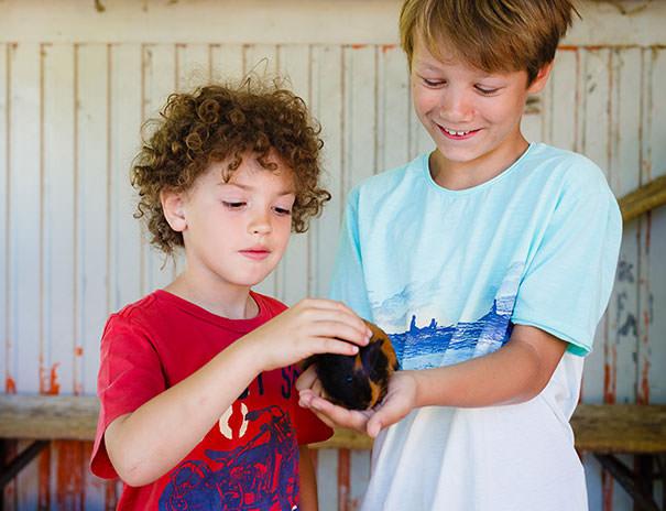 Sonnenhof - Häschen und Meerschweinchen streicheln - Streichelzoo