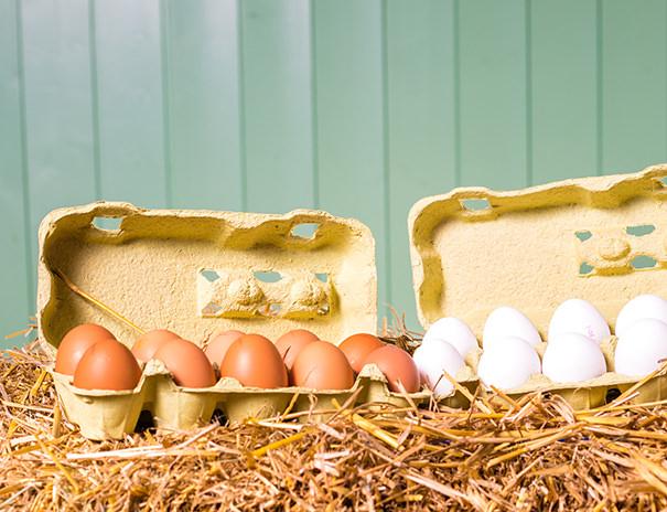 Eier von freilaufenden Hühnern vom Sonnenhof