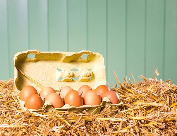 Hofeigenen Eier von Freiland-Hühnern