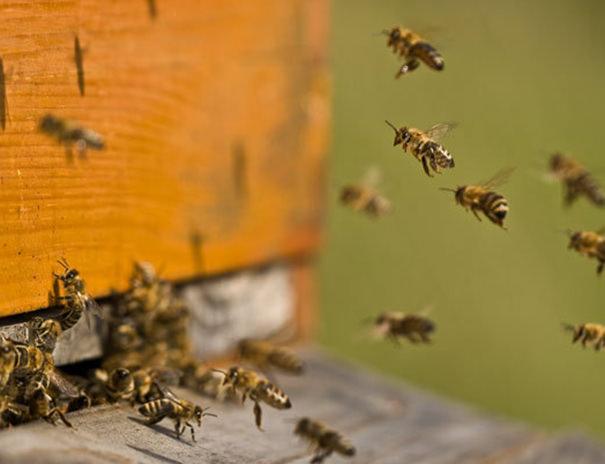 Honig vom Sonnenhof