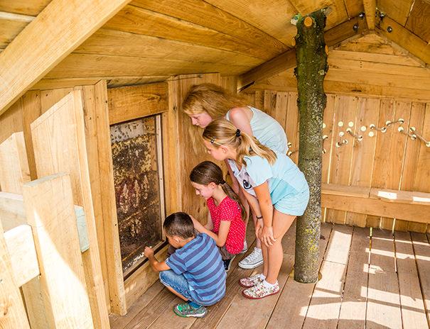 Bienenbaumhaus