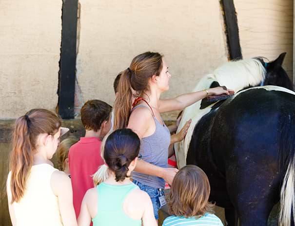 Kontakt zu Pferden