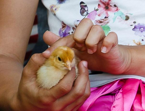 Bezug zum Tier: Lernort Bauernhof
