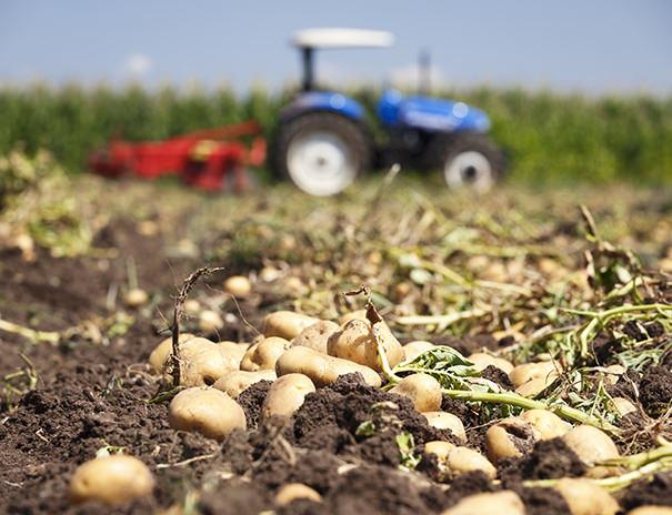 Landwirtschaft auf dem Sonnenhof